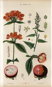 1887 FLOWERS PLANTS TROPICAL FRUIT Antique Chromolithograph Print FOLIO G.Hayek