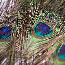 10 Pfauenfedern 70-80 cm lang Natur Federn Hutschmuck Haarschmuck mit Pfauenauge