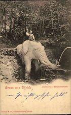 Schweiz Litho-AK ZÜRICH Zoo Elephant Bach Zürichberg mit Reiter 1900 Tierpark