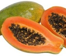 RED PAW PAW Carica papaya high-yielding sweet fruiting plant in 140mm pot