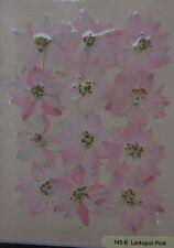 Larkspur Pink Real Pressed Flower Craft Embellishments