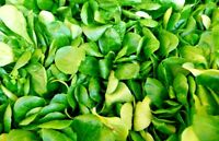 MACHE SALAD 1000 SEEDS VEGETABLES OPEN-POLLINATED MICRO-GREENS NON-GMO SPRING US
