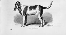 Stampa antica CANE CHIEN D' ARTOIS 1879 Old print dog