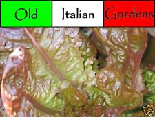 500 Four Season Heirloom Red Lettuce Seeds Beautiful Plant Easy Grower Non GMO