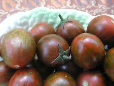 Tomato 'Camomato' Striped Cherry (solanum lycopersicum) 25 Reliable Viable Seeds