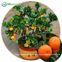 30pcs Edible Fruit Mandarin Bonsai Tree Seeds Citrus seed Bonsai Mandarin Orange