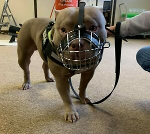 Strong Metal Wire Basket Dog Muzzle  for American Bully