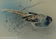 Fine Antique Chinese or Japanese Painting Pheasant on Silk Signed