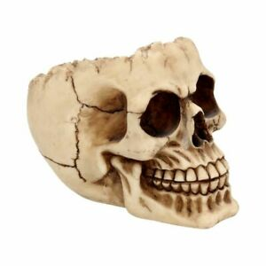 Nemesis Now  LOBO  Half Skull  Dish Ashtray Ornament   Gothic Vamp
