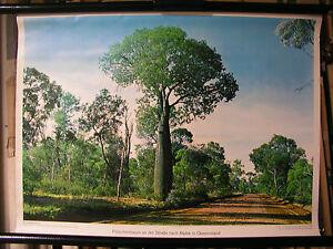 Schulwandbild Mural Image Flaschenbaum Alpine Queensland Australia 71x51cm