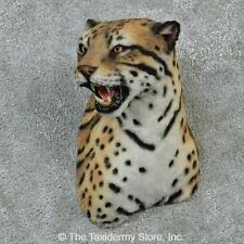 #12903 E | Reproduction Ocelot Shoulder Taxidermy Head Mount - Lion Safari