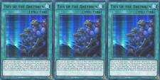 YUGIOH 3x Ties of the Brethren LDK2-ENY02 Ultra Rare 1st Edition