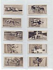 More details for greyhound racing ogden's cigarette cards 1st series 1927 full set of 25 vgc