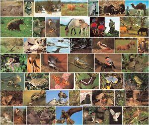 Animal Vintage Postcards Cheetah Birds Deer Kangaroo Camel etc Many Available.