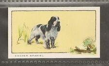 1934 Uk Dog Art Body Gallaher Cigarette Card Blue Roan English Cocker Spaniel