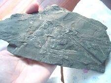 F-356e fossil Fern in slate matrix specimen St Clair Pennsylvania plant botanty