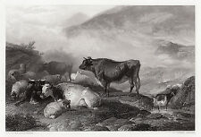"1800s Thomas Sidney Cooper Engraving ""Morning Cattle & Sheep"" Framed SIGNED COA"