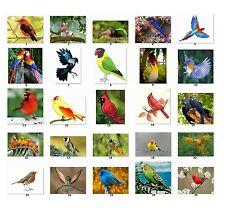 30 Personalized Return Address labels Beautiful Birds Buy 3 get 1 free {bi2}