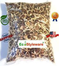 ~1000 Moringa Seed Oleifera SEMILLAS DE MORINGA