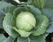 Cabbage Seeds- Copenhagen Market- 1,000+  2019 Seeds  $1.69 Max. Shipping.order
