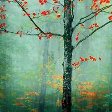 LANDSCAPE ART PRINT Another Day Another Fairytale Katya Horner