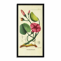 Biodiversity Flower Diagram Morning Glory Long Framed Art Print