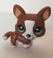 Genuine LPS Littlest Pet Shop #2150 Brown & White Corgi Dog animal toy figure