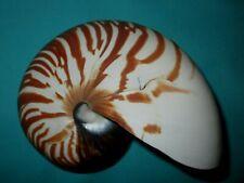 Nautilus pompilius, 136mm lang-schönes Muster