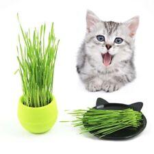 400PCS Organic Cat Grass Seeds Wheat Catnip Healthy Treat Plant For Pets