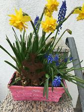Gartenstecker Frosch Country mit Stab Deko Dekoration Gartendeko Gall /& Zick