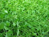 80 x Vordergrund Wasserpflanzen aquariumpflanzen 8 pflanzenarten PP