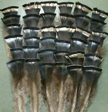 48 Wild Merriam All Black Back Feathers 3 1/2-7