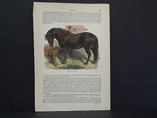 Horses, c.1890 Suffolk Punch #13