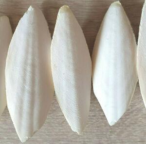 10 x ~15 cm ~160g !!! Sepiaschalen Sepiaschale Kalzium Mineralien Vögel Garnelen