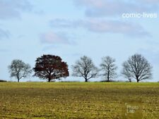 """A Line of Trees Photograph Print 8""""x6"""" Glossy New Photo Art"""