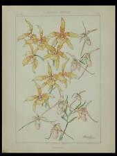 ORCHIDEES, HABERT DYS -1896- LITHOGRAPHIE, ART NOUVEAU, FLEURS,