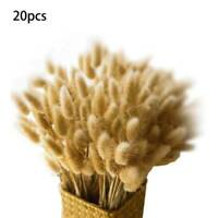 20x Natural Rabbit Tail Grass Dried Home Wedding Decor Flowers Bouquet Supply