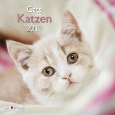 Katzen 2019 Broschürenkalender,
