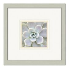 AEONIUM FLOWER, - Premium Print  double matted 13.5x13.5 inch frame