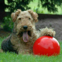Boomer Red Ball Indestructible Solid Dog Toy Various Size pup Pet Toys Nice B9S6