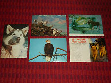 Alaska Joe Postcard Lot ANCHORAGE AK Alaskan Malamute Moose Bald Eagle Sheep Ram