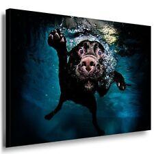 Hund & Abstrakt Leinwandbild Ak Art Bilder Mehrfarbig Wandbild Top Geschenk XXL