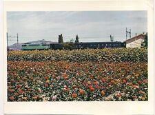 fleurs dans la vallée du rhône