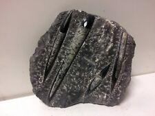 MINERALE Orthoceras Fossile Devoniano 416-375 Milioni Anni Collezione 4Ortoceras