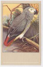 CP POSTCARD Oiseau Bird Jaco Psittacus erythacus n52