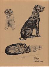 More details for c. aldin original 1935 print of a collie -retrieve- alsatian & keeshund