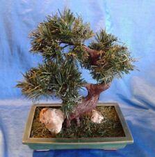 "Vintage Bonsai Tree Realistic Artificial Pine Needles 13"" Ceramic Pot Fake Plant"