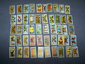 Loose Brooke Bond Picture Cards - Butterflies of the World ~  50/50