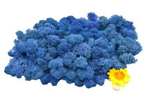 Muwse Islandmoos Köpfe V 4-12cm 100g Blau handgereinigt Moos Deko Floristik