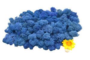 Muwse Islandmoos Köpfe V 100g Blau 2x gereinigt weich trocken. Moos Deko